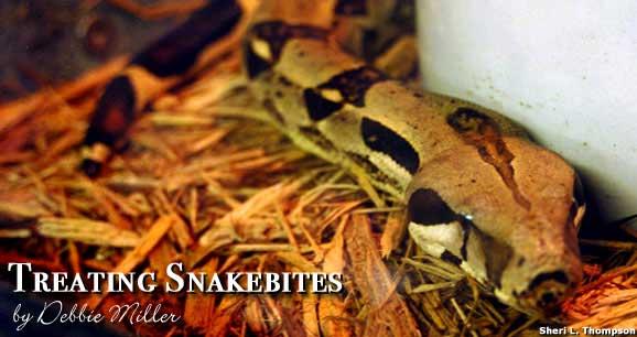 Treating Snakebites