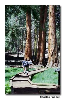 The accessible Big Trees Trail at Sequoia National Park makes it easy for everyone to see the giant sequoias.