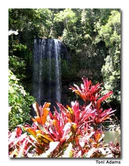Milla Milla Falls near Cairns is a must-see.