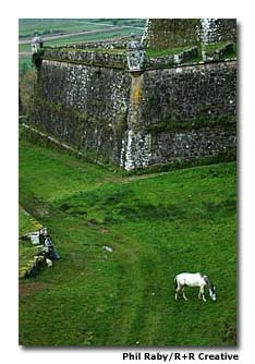 A horse grazes outside the walls of Valença do Minho.