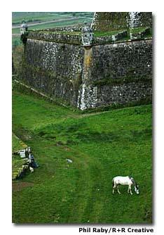 A horse grazes outside the walls of Valença do Minho.