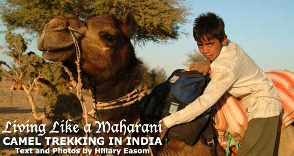 Living Like a Maharani: Camel Trekking in India;