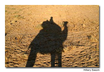Shadow of a Camel