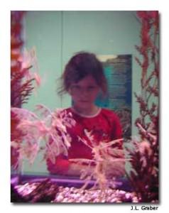 Leafy seadragons at the Charleston Aquarium