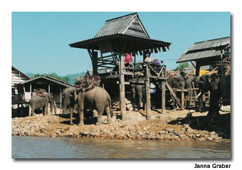 Elephants walk about in this Karen Village along the Mae Kok River in Northern Thailand.