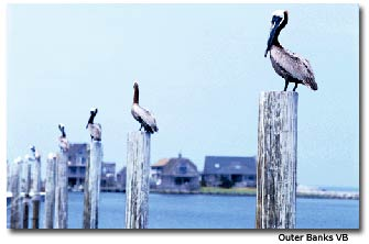 With over 130 miles (209 km) ofunspoiled beaches, the Outer Banks is truly the natural choice for a great vacation.
