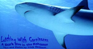 Lunching With Carnivores: A Shark Dive in The Bahamas