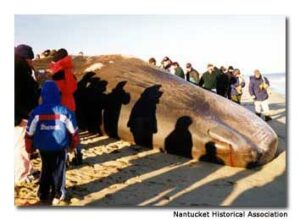 A Whale of a Good Time in Nantucket