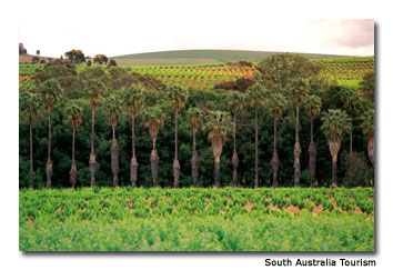 The Barossa Valley is one of Australia's top wine-producing regions.