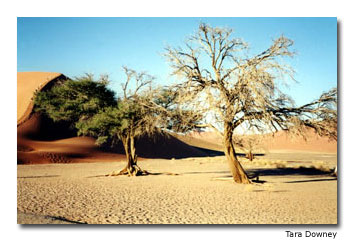 Sossusvlei is a shallow depression sometimes filled with water during the rainy season.