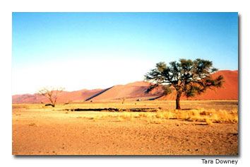 The Namib-Naukluft National Park is the largest ecological preserve in Africa. It's home to the world's tallest sand dunes.