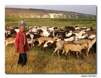 A young boy tends his family's goats.