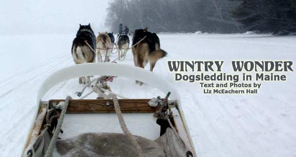 leadmainEdogsledding