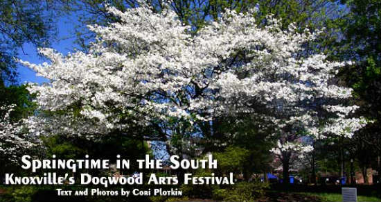 The festival is named after this beautiful tree.