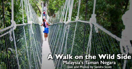 One of the world's longest canopy walks is in Taman Negara National Park.