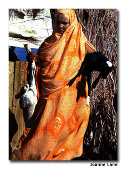 Woman with goats near Atar, Mauritania.