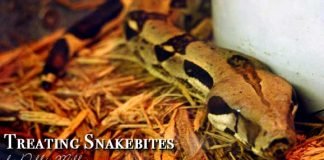 How to treat a snakebite