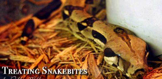 Travel Health: Treating Snakebites