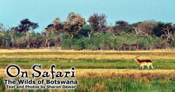 LEADBotswana