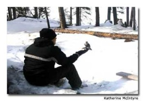 A Cree boy feeds bannock crumbs to a gray jay.