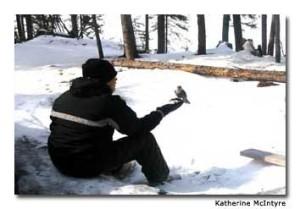A Cree boy feeds bannock crumbs to a gray jay.