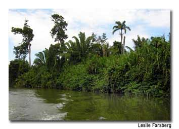 A boat ride up Monkey River offers glimpses of alligators, howler monkeys and numerous species of tropical birds.