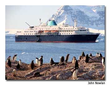 Explorer II passengers are treated to the sight of a colony of gentoo penguins.