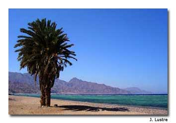 Dahab, the base camp for most who hike Mt. Sinai,faces the Gulf of Aqaba.