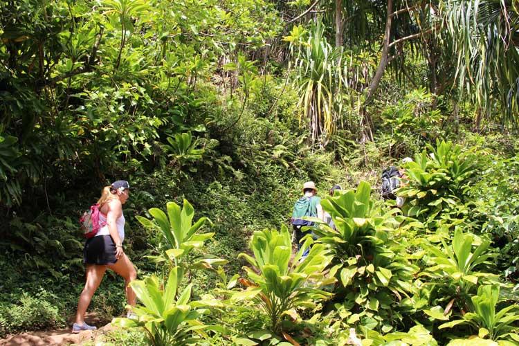 Ziplining and Hiking on the Island of Kauai Hawaii