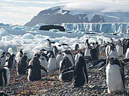 Penguin Beach, Antarctica
