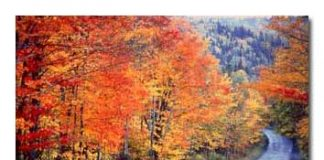 Maine Rangeley Fall Colors