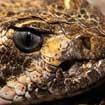Chasing Snakes: Northwestern Nevada's Wild Lands