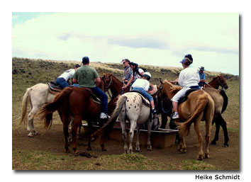 A water trough provides a welcome break for horses during the horseback-riding tour.