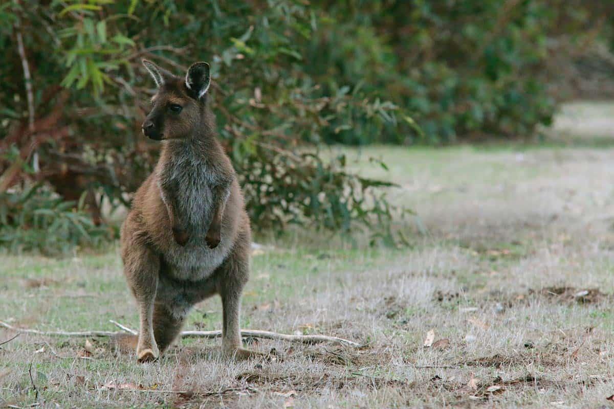Bucket List Idea #14: Australia