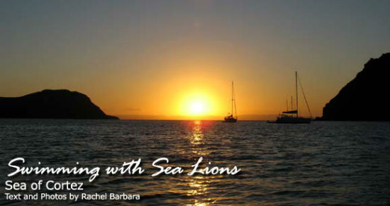 The Sea of Cortez is the perfect place for sea lion spotting.