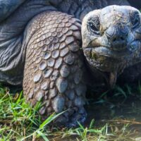 Galapagos Islands: A Stay at Caleta Iguana Hotel on Isabela Island