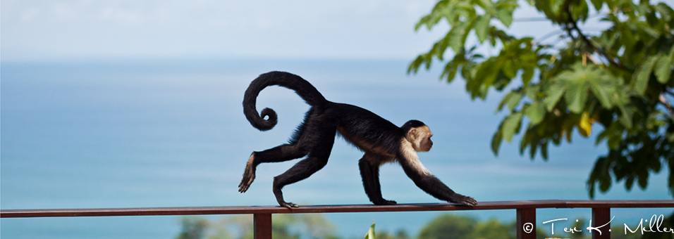 Call of the Wild: Costa Rica's Osa Peninsula