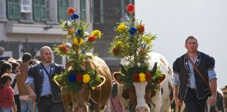 Désalpe is a beloved festival tradition in Switzerland. Photo by La Gruyere Tourism