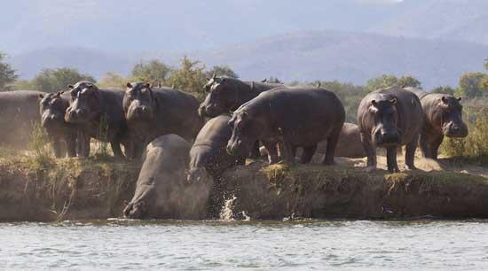 Lower Zambezi National Park in Zambia is rich with wildlife and gorgeous scenery. Photo by Aaron Gekoski