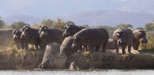 Way Ahead of the Game: Lower Zambezi National Park