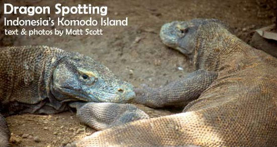 Komodo Dragon's can be fearsome.