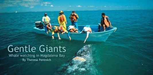 Gentle Giants: Whale Watching in Baja California Sur's Magdalena Bay