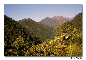 The Manu Cloud Forest is so named because of its higher elevation, cooler temperatures and increased moisture.