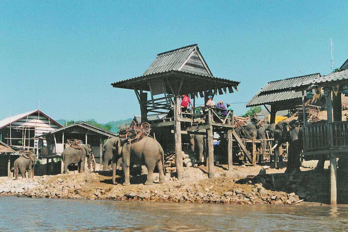 Elephants at a Karen Village in Thailand