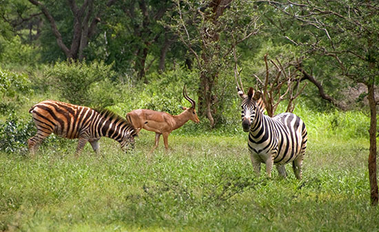 South Africa is rich with wildlife. Photo by Larry Larsen
