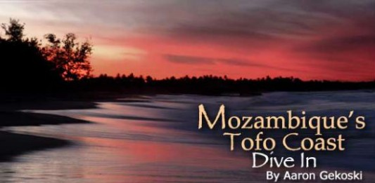 Mozambique's Tofo Coast: Dive In