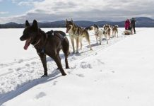Dog sledding in Maine with Mahoosuc Guide Service Maine