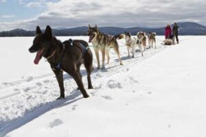 Winter Wonder: Dog Sledding Adventure in Maine