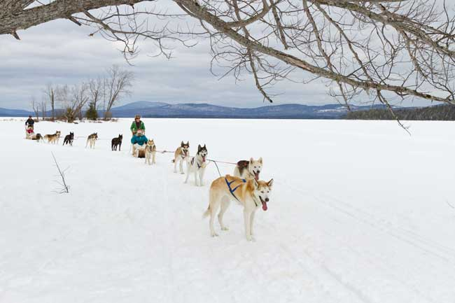 Dog sledding in Maine with Mahoosuc Guide Service