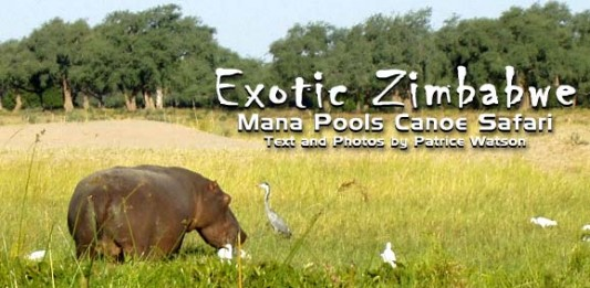 Exotic Zimbabwe: Canoe Safari in Mana Pools National Park